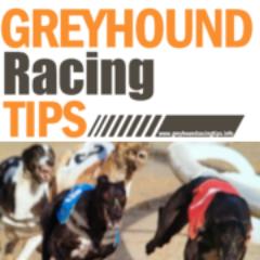 Greyhound Racing Tips